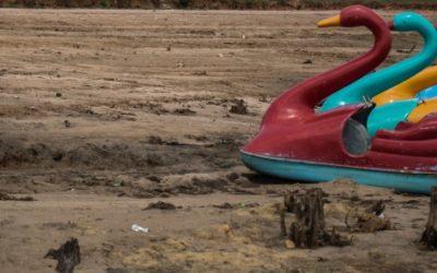 Foto de quatro remos de cisne em um chão seco.