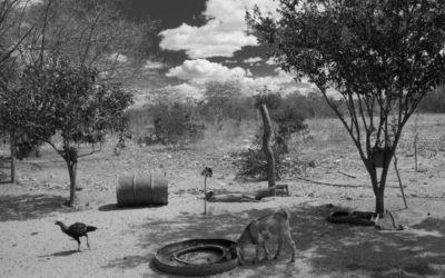 Foto preto e branca de um pasto seco, uma galinha e uma cabra aparecem na foto.