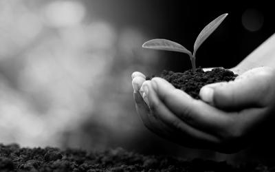 foto em preto e branco de criança segurando terra com broto de planta. Relaciona-se à questão de plantar árvores e a melhoria na qualidade do ar