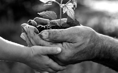 Foto em preto e branco mostra mão de adulto e mão de criança segurando planta, representando as presentes e futuras gerações contra as mudanças climáticas